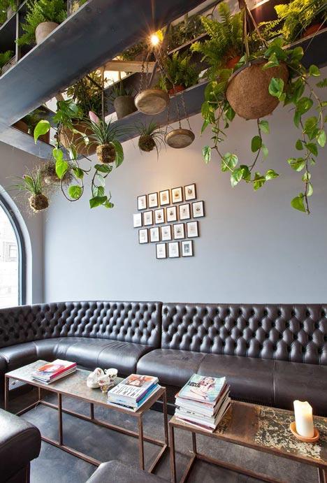 mogeen hanging plants