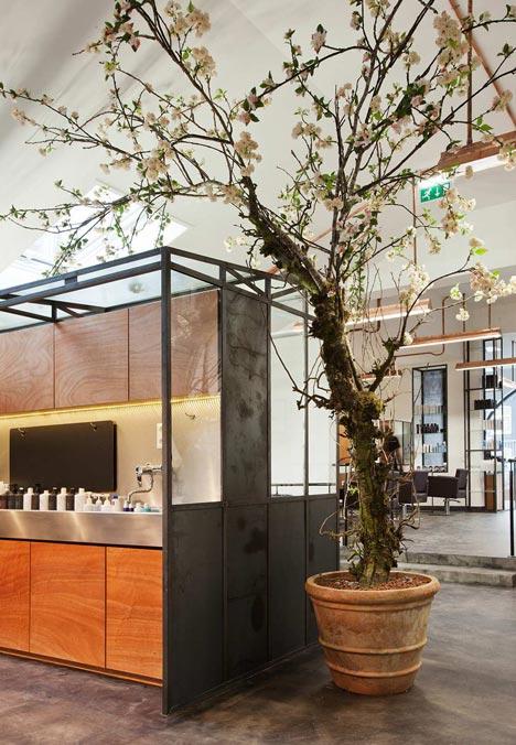 mogeen tree in salon
